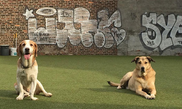 Doggie Daycare Red Hook NY